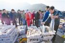 宁波奉化桐照渔港的繁忙早市:隔着屏幕都能飘来鱼香