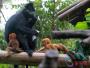 """""""猴界大熊猫""""在广州产下双胞胎 为世界首例!"""