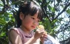 杭州塘栖枇杷已开采