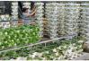 山東農業脫貧攻堅三年行動方案來了!提出五大重點工程