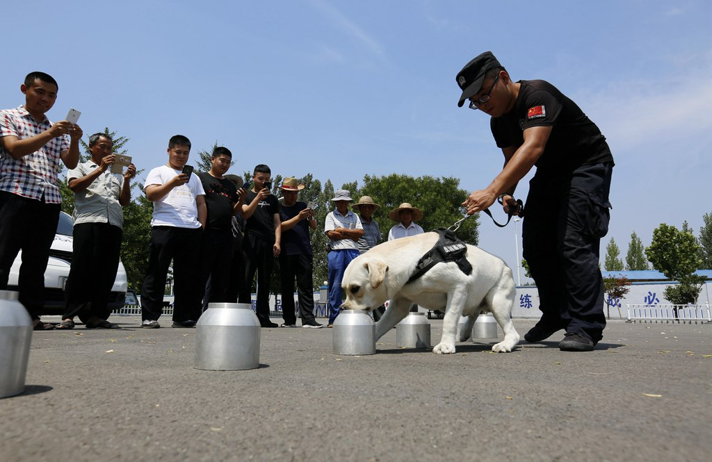 山东沂南:缉毒犬亮身手