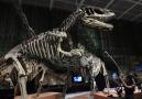 燃!侏罗纪世界真正的霸主亮相南京博物院