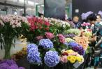 """""""东方花卉华尔街""""今年上半年日均交易量超329万枝"""