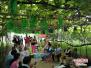 周末葡萄采摘好去处 郑州供销邀您到富禧生态园品味好葡萄