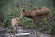 重归故土33周年 麋鹿形象将参与冬奥吉祥物征集