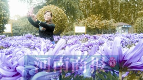 郑州人民公园菊展开幕 4万多盆菊花等你大饱眼福
