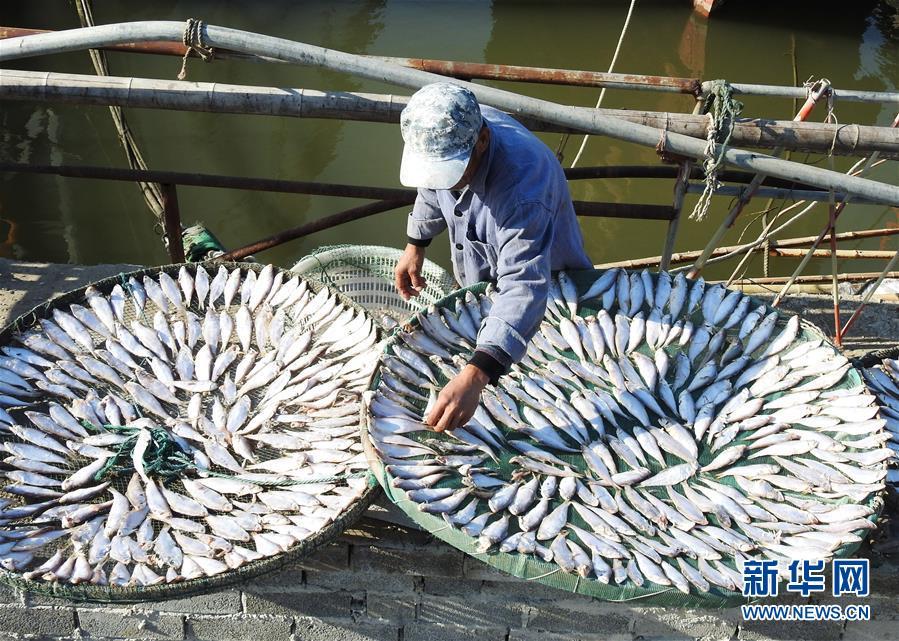 10月30日,在江苏省连云港市连云区西连岛村渔港码头,渔民在晾晒鱼干。 新华社发(耿玉和 摄)