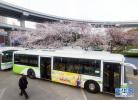 4月1日起,衡水市城市公交恢复正常收费