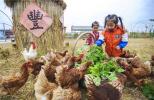 """河北永清:""""农业+文化+旅游""""推动乡村振兴"""
