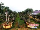 南阳宛城区:特色农业助力贫困群众增收脱贫